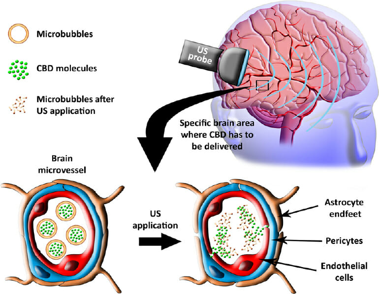 The Interplay between the Endocannabinoid System , Epilepsy and Cannabinoids